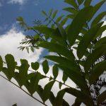 Poză realizată cu LG L70 (D320) natura